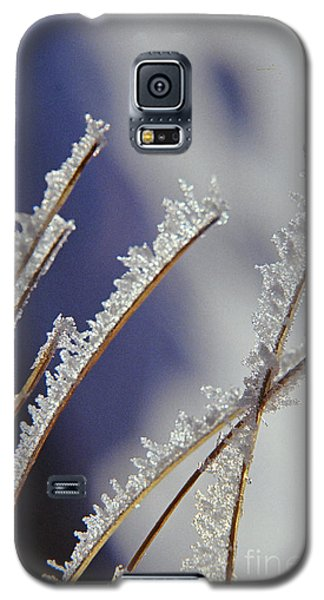 Galaxy S5 Case featuring the photograph Ice Crystals On Fireweed Fairbanks  Alaska By Pat Hathaway 1969 by California Views Mr Pat Hathaway Archives