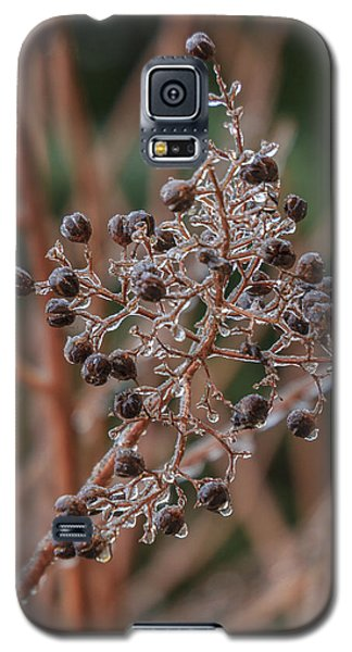 Galaxy S5 Case featuring the photograph Ice On Berries by Patricia Schaefer