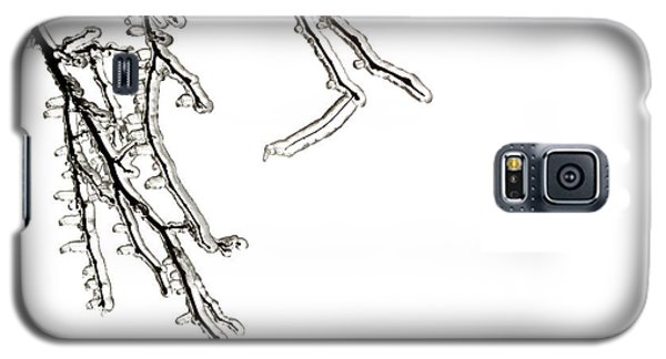 Ice Galaxy S5 Case - Ice On Branches by Blink Images