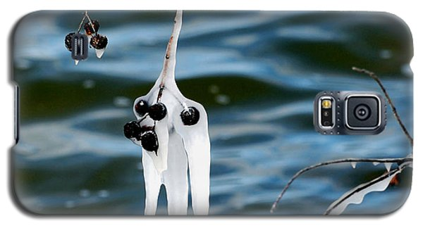 Galaxy S5 Case featuring the photograph Ice On Seed Pods by Linda Cox
