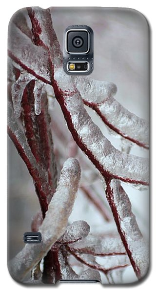 Galaxy S5 Case featuring the photograph Ice On Tree  by Douglas Pike