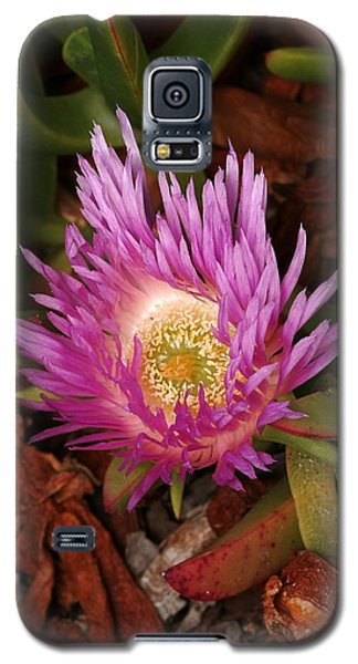 Ice Plant San Diego Galaxy S5 Case