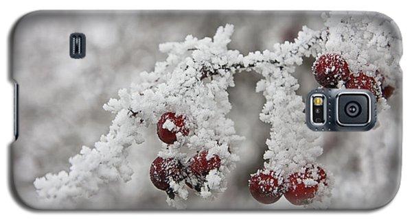 Iced Hawthorn Galaxy S5 Case