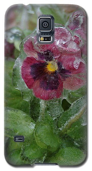 Iced Purple Pansy Galaxy S5 Case