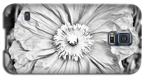 Iceland Poppy In Black And White Galaxy S5 Case