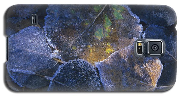 Icy Leaves Galaxy S5 Case by Susan Rovira