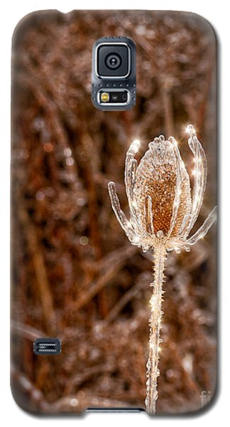Icy Thistle Galaxy S5 Case by Les Palenik