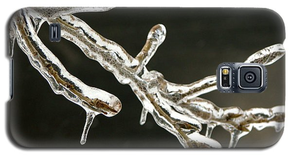Icy Twig Galaxy S5 Case