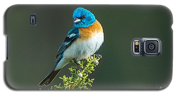 Idaho Lazuli Bunting Galaxy S5 Case by Yeates Photography
