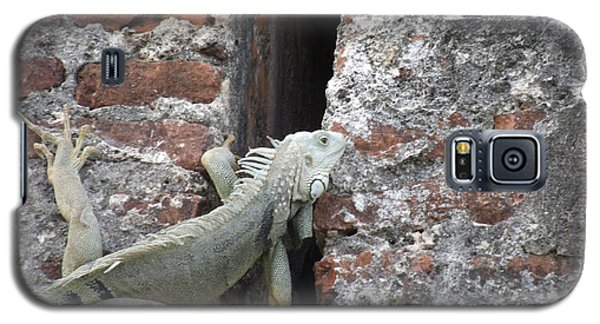 Galaxy S5 Case featuring the photograph Iguana by David S Reynolds