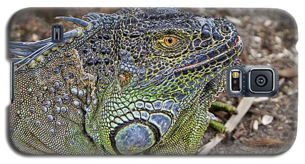 Galaxy S5 Case featuring the photograph Iguana by Olga Hamilton