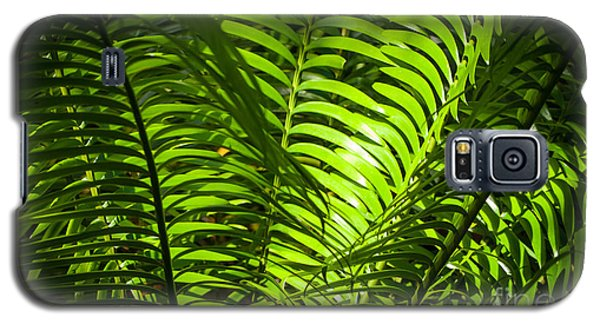 Illuminated Jungle Fern Galaxy S5 Case