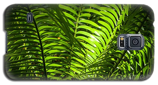Illuminated Jungle Fern Galaxy S5 Case