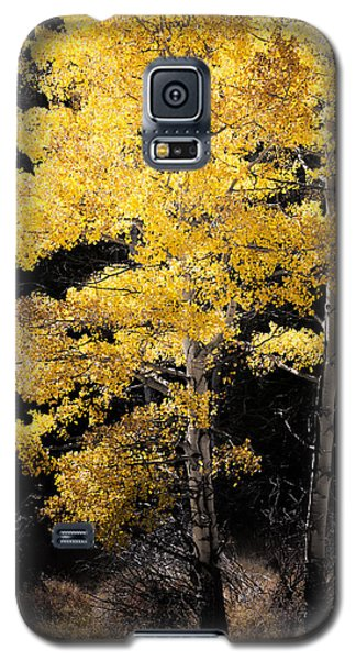 Illuminated Galaxy S5 Case by The Forests Edge Photography - Diane Sandoval