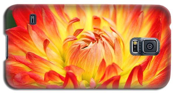 Img 0023 Flor En Rojo Detalle Galaxy S5 Case