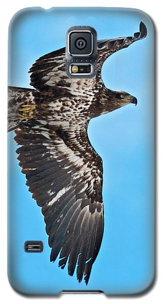 Galaxy S5 Case featuring the photograph Immature Bald Eagle by Stephen  Johnson