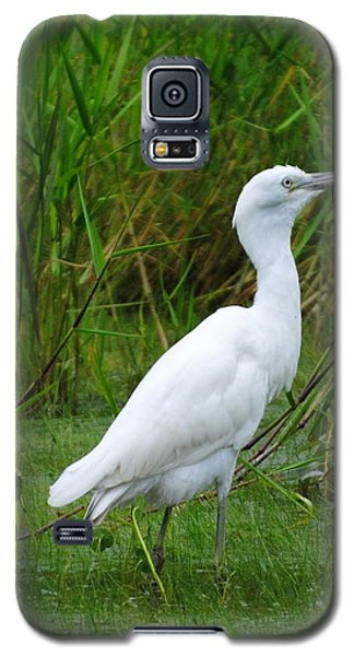 Immature Little Blue Heron Galaxy S5 Case