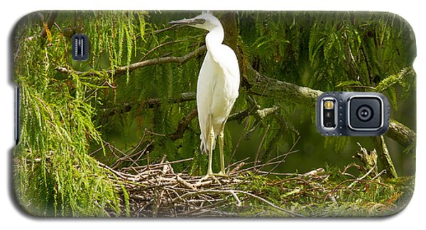 Galaxy S5 Case featuring the photograph Immature Little Blue Heron by Doug McPherson