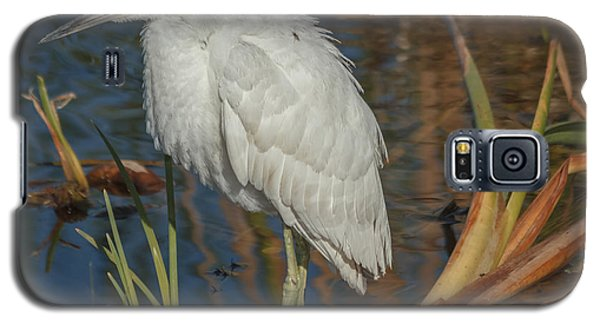 Immature Little Blue Heron Galaxy S5 Case by Jane Luxton