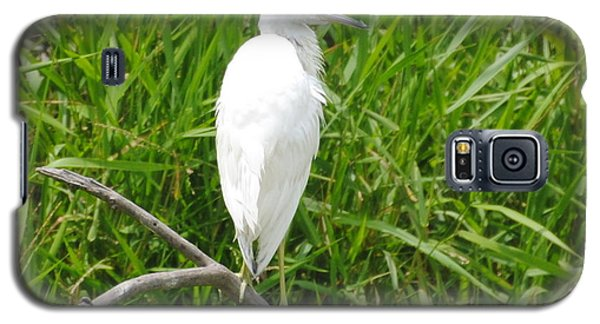 Immature Little Blue Heron On Watch Galaxy S5 Case