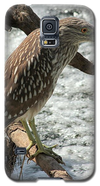 Galaxy S5 Case featuring the photograph Immature Night Heron by Kenny Glotfelty