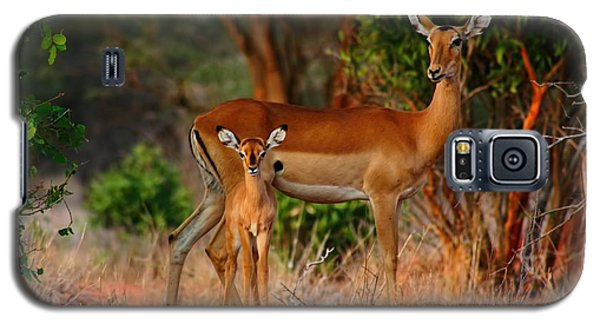 Impala And Young Galaxy S5 Case by Amanda Stadther