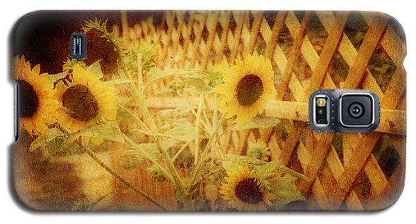 Sunflowers And Lattice Galaxy S5 Case