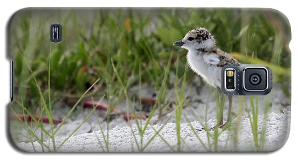 In The Grass - Wilson's Plover Chick Galaxy S5 Case