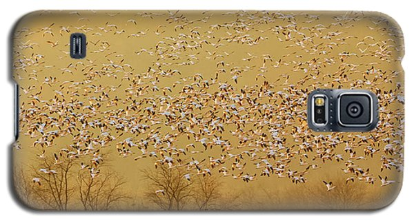 Geese Galaxy S5 Case - In The Magic Golden Would by David Hua