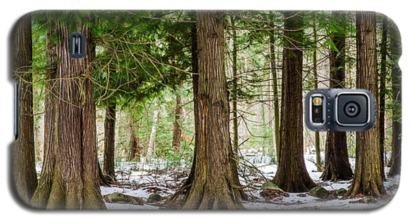 Galaxy S5 Case featuring the photograph In The Thuja Forest by Kennerth and Birgitta Kullman