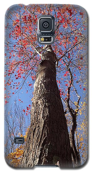 In The Woods 1 Galaxy S5 Case