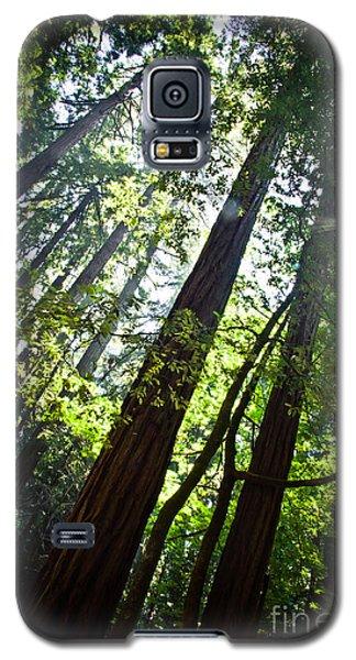 In The Woods Galaxy S5 Case by Ana V Ramirez
