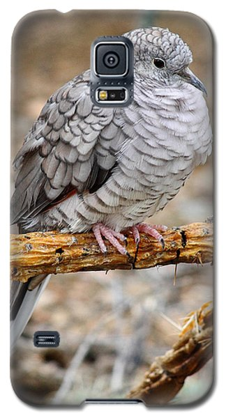 Galaxy S5 Case featuring the photograph Inca Dove by Elaine Malott