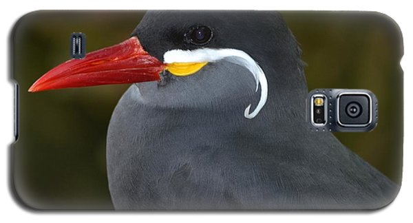 Inca Tern  Galaxy S5 Case