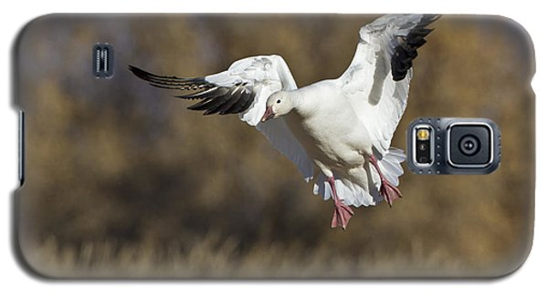 Galaxy S5 Case featuring the photograph Incoming Snow Goose by Bryan Keil