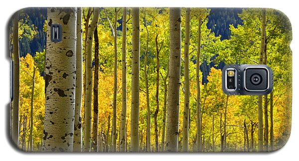Independence Pass Fall Colors Galaxy S5 Case