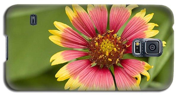 Indian Blaket Bloom Galaxy S5 Case