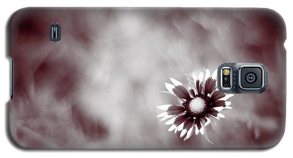 Indian Blanket Flower Galaxy S5 Case by Darryl Dalton