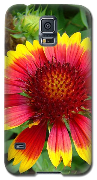 Indian Blanket Flower Galaxy S5 Case