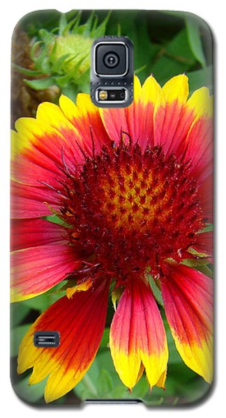 Indian Blanket Flower Galaxy S5 Case by Sue Melvin