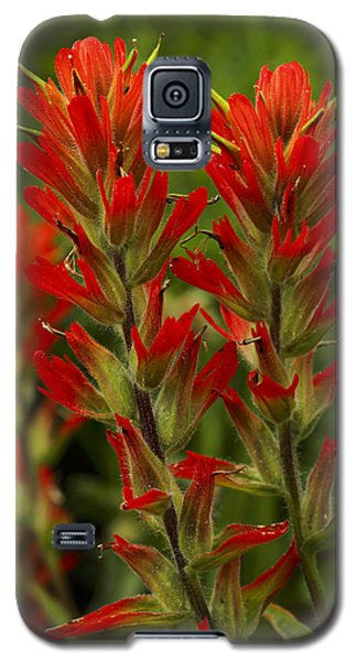 Indian Paintbrush Galaxy S5 Case