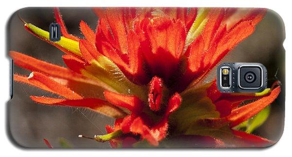 Indian Paintbrush Galaxy S5 Case by Belinda Greb