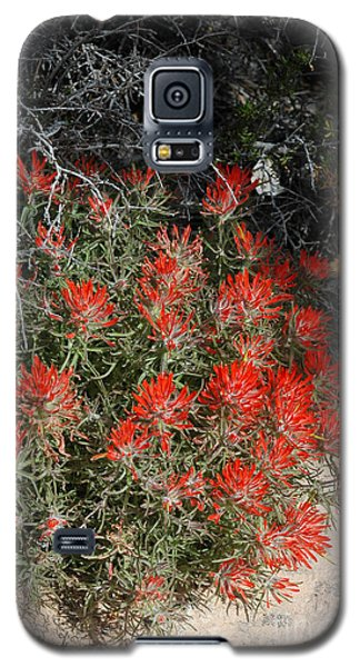 333p Indian Paintbrush Flower Galaxy S5 Case