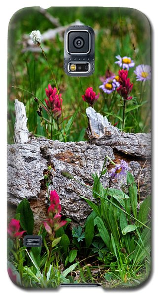 Galaxy S5 Case featuring the photograph Indian Paintbrush by Ronda Kimbrow