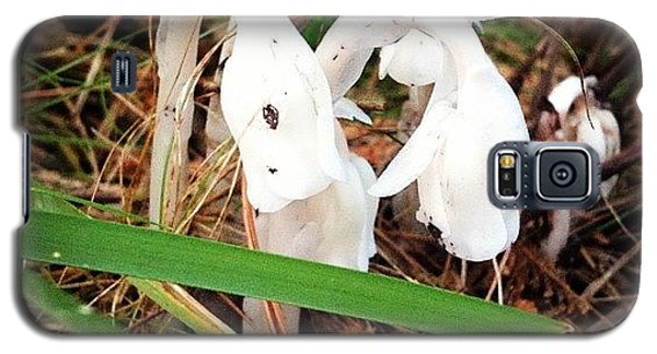 Indian Pipe Galaxy S5 Case by Christy Beckwith