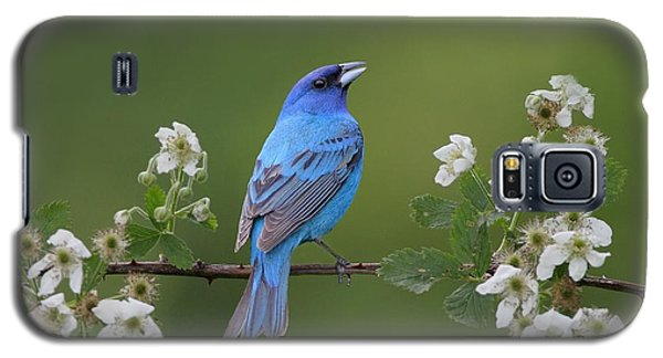 Indigo Bunting On Berry Blossoms Galaxy S5 Case