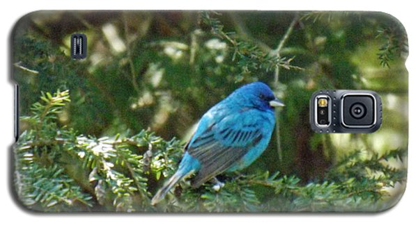 Indigo Bunting Visit Galaxy S5 Case by Brenda Brown