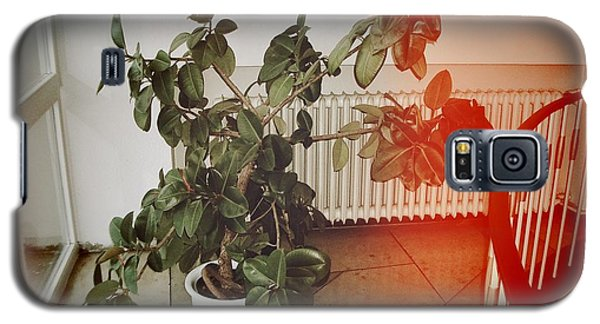 Professional Galaxy S5 Case - Indoor Plant Standing In The Hallway by Matthias Hauser