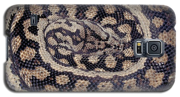 Inland Carpet Python  Galaxy S5 Case by Karl H Switak