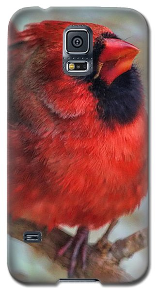 Inquisitive Cardinal Galaxy S5 Case